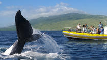 Whale Watch by Raft in Lahaina, Maui, Hawaii, Family Friendly Tours & Activities