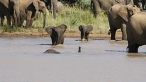 Pilanesberg Safari Tour from Johannesburg , Johannesburg, Safaris
