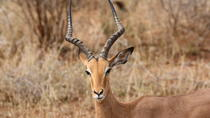 Private Tour: 2-Day Chalet Pilanesberg Safari from Johannesburg, Johannesburg, Multi-day Tours