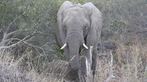 Private Tour: 2-Day Tented Kruger Park Safari from Johannesburg, Johannesburg, Full-day Tours