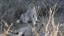 Private Tour: 2-Day Tented Pilanesberg safari from Johannesburg, Johannesburg, Multi-day Tours