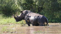 Private Tour: 3-Day Tented Kruger Park Safari from Johannesburg, Johannesburg, Multi-day Tours