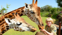 Australia Zoo Day Trip from the Gold Coast or Brisbane, Brisbane, Day Trips