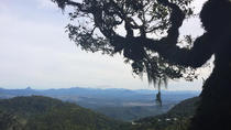 O'Reillys Rainforest Retreat and Mt Tamborine Day Trip from Brisbane or the Gold Coast, Brisbane, ...