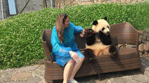 Private Day Tour with Panda Holding at Dujiangyan Panda Base and Wuhou Temple , Chengdu, Private...