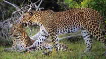 Private Tour: Wilpattu National Park Safari, Anuradhapura, Safaris