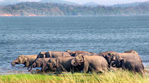 Private Tour: Yala National Park Half-Day Afternoon Safari, Yala National Park, Safaris