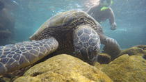 West Maui's Three Beach Snorkel Tour, Maui, Family Friendly Tours & Activities