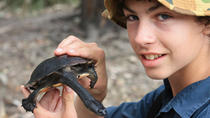 Melbourne Wetlands Turtle Expedition with Local Scientist, Melbourne, Nature & Wildlife
