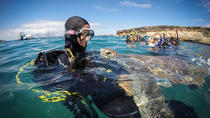 PADI Discover Scuba Diving Course in Las Americas Tenerife, Tenerife, Scuba Diving