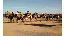 Camel Ride on Mojácar Beach, Almeria, Nature & Wildlife