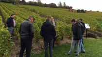 6-Hours Small-Group Champagne Region Vineyard Tour from Reims with culinary workshop with a chef ...