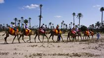 Private 1-Hour Camel Ride in the Palm Grove of Marrakech, Marrakech, Nature & Wildlife