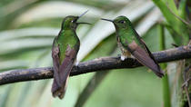 Two-Day Tour of Bird-Watching, Cacao Farms and Chocolate Tasting, Quito, Overnight Tours