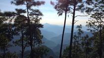 Private Tour: Bird Watching and Hiking in the Sierra Madre Mountains from Mazatlan, Mazatlan, ...