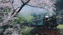 Day Trip to Experience the Steam Locomotive Train and Cherry Blossom Viewing from Tokyo, Tokyo,...