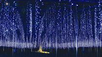 Day Trip to Harada Strawberry Farm and Ashikaga Flower Park Illumination Show, Tokyo, Day Trips