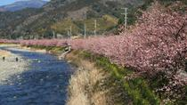 Day Trip to Shizuoka including Cherry Blossom Viewing and Strawberry Picking from Tokyo, Tokyo,...