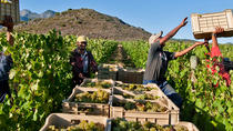 3 Regions Wine Tour from Cape Town, Cape Town, Wine Tasting & Winery Tours