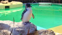 Penguin Island and Fremantle Day Trip from Perth, Perth, Day Trips