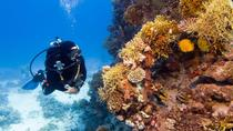 2 Tank Local Dive in Playas del Coco, Guanacaste and Northwest, Scuba & Snorkelling