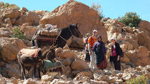 A Walking Day in the High Atlas Among Nomads, Marrakech, Nature & Wildlife