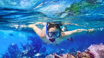 Whitsundays Sail and Snorkel at Blue Pearl Bay and Langford Reef, The Whitsundays & Hamilton ...