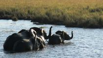 5-Night Tour of National Parks in Tanzania from Arusha, Arusha, Multi-day Tours