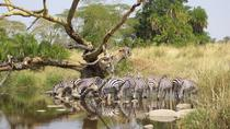 7-Day Great Tour Masai Mara Nakuru Amboseli Tsavo, Nairobi, Multi-day Tours