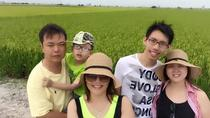 Rice Fields and Fireflies Tour including Lunch and Dinner from Kuala Lumpur, Kuala Lumpur, Night ...