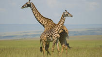 Nairobi National Park tour, David Sheldrick Elephant Orphanage, Giraffes & Karen Blixen Museum Tour ...