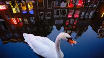 Offbeat Amsterdam Red Light District Nighttime Walking Tour with a Local Guide, Amsterdam, Walking ...
