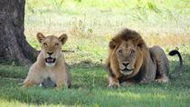 Full-Day Rhino and Lion Park Tour from Johannesburg, Johannesburg, Day Trips