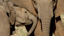 Private Addo Elephant National Park Day Tour from Port Elizabeth, Port Elizabeth, Private Tours