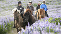 Full Day Horse Riding and Glacier River Rafting from Reykjavik, Reykjavik, Horseback Riding