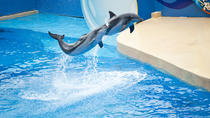 Coach Day Tour - Ocean Park Tour with Hotel Pickup in Kowloon Area From Hong Kong, Hong Kong, Bus &...