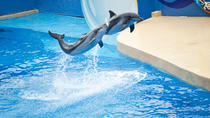 Ocean Park Full-Day Coach Tour with Hotel Pickup in Kowloon Area from Hong Kong, Hong Kong, Bus &...