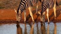 8 Days Kenya Safari Lodge Adventure, Nairobi, Multi-day Tours