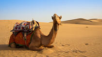 Desert Safari: Wahiba Sands and Wadi Bani Khalid from Muscat, Muscat, 4WD, ATV & Off-Road Tours