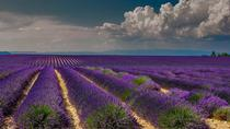 Violet Tour : a Full Day on the Lavender Route, Avignon, Day Trips