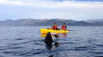 Kayaking Adventure in Kaikoura, Christchurch, Kayaking & Canoeing