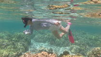 Island Safari Snorkeling by Motor Boat from Fajardo, Fajardo, Day Cruises