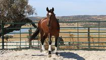 Horse Riding in Alentejo, Lisbon, Wine Tasting & Winery Tours