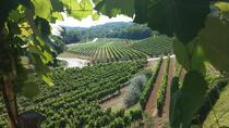 The Best of Istria Wine Tour , Istria, Wine Tasting & Winery Tours