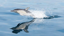 Swimming with Dolphins at Portugal's Terceira Island, Terceira