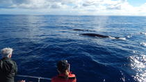 Whale Watching Off Portugal's Coast, Terceira, Dolphin & Whale Watching