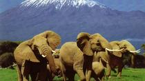 6 Days Amboseli, Lake Nakuru, Masai Mara Wildlife Safaris All Inclusive, Nairobi, Multi-day Tours