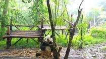 Chengdu Impressions Day Tour including the Sichuan Cuisine Museum and Giant Pandas, Chengdu