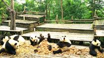 Private Half-Day Panda Base Trip from Chengdu, Chengdu, Nature & Wildlife