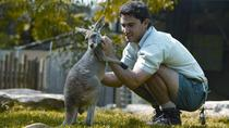 Sydney Taronga Zoo General Entry Ticket and Wild Australia Experience, Sydney, Zoo Tickets & Passes